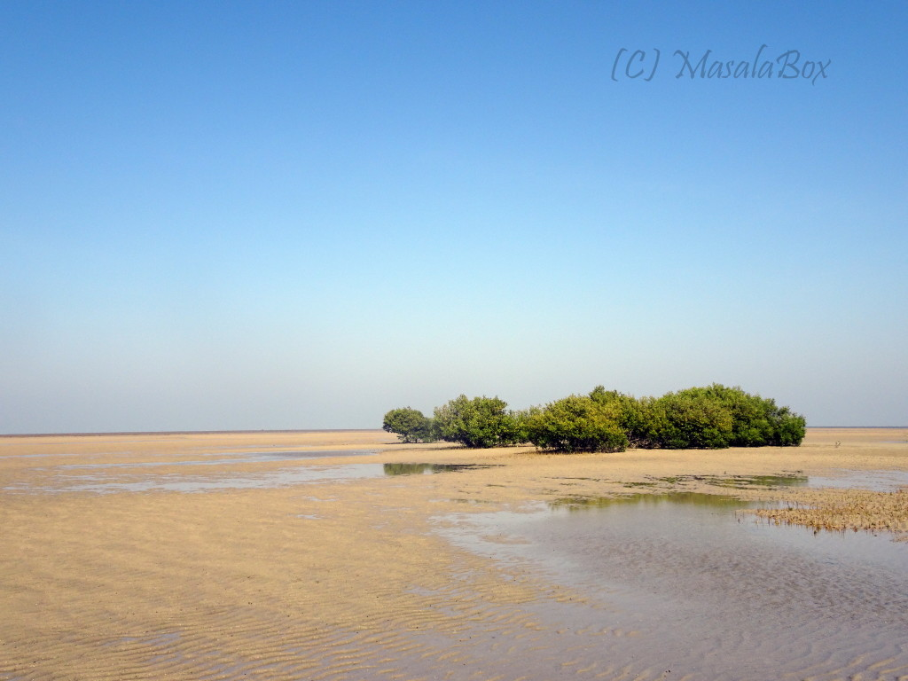 Mangroves with water receded