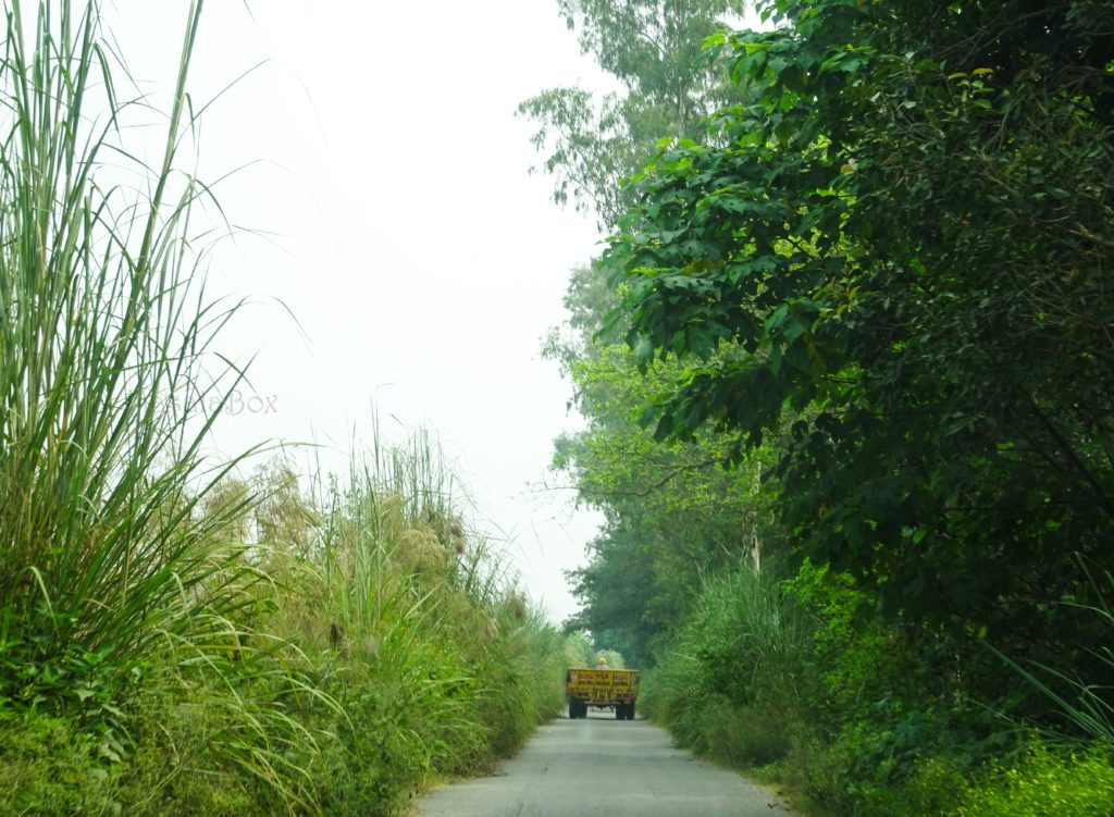 Rural Punjab village