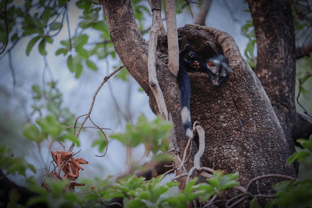 Wild clicks photography
