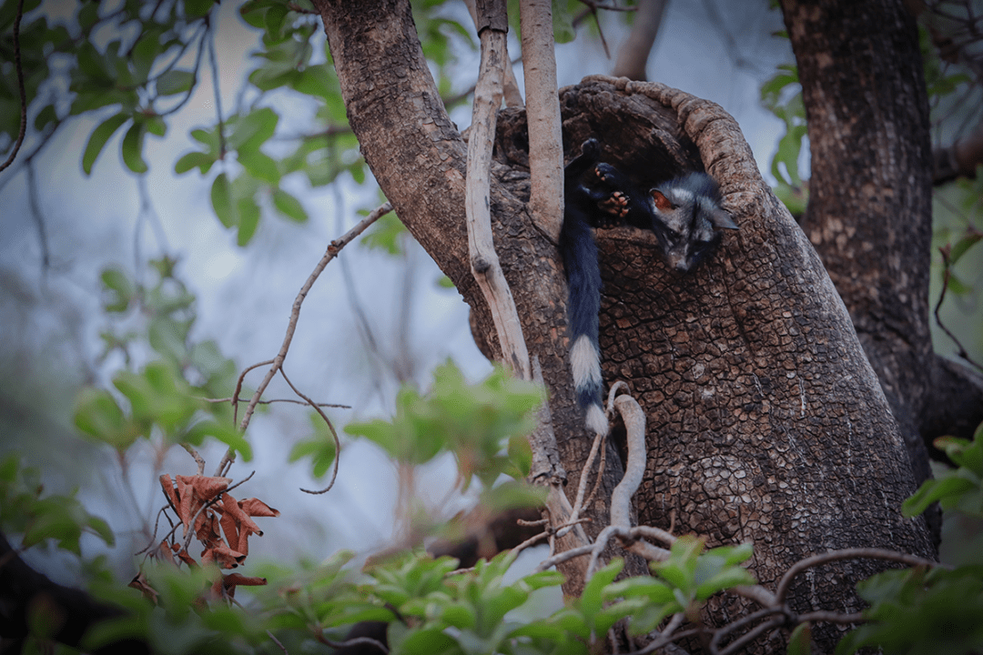 8 Stunning Wildlife pics from India's Only Live Photo Contest – Wild Clicks Season 7